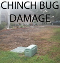 Chinch bug damaged lawn with words Chinch Bug Damage
