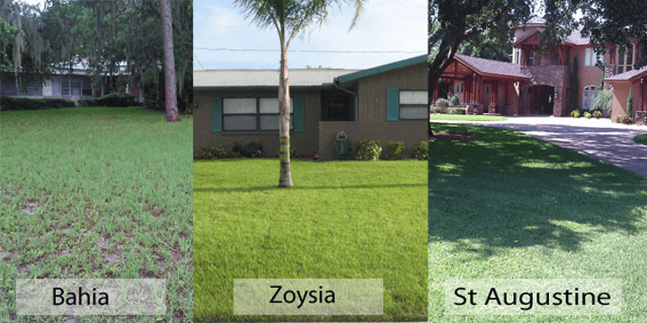 Is There A Better Grass For A Lawn In Pinellas County Than Floratam St Augustine I Love Turf
