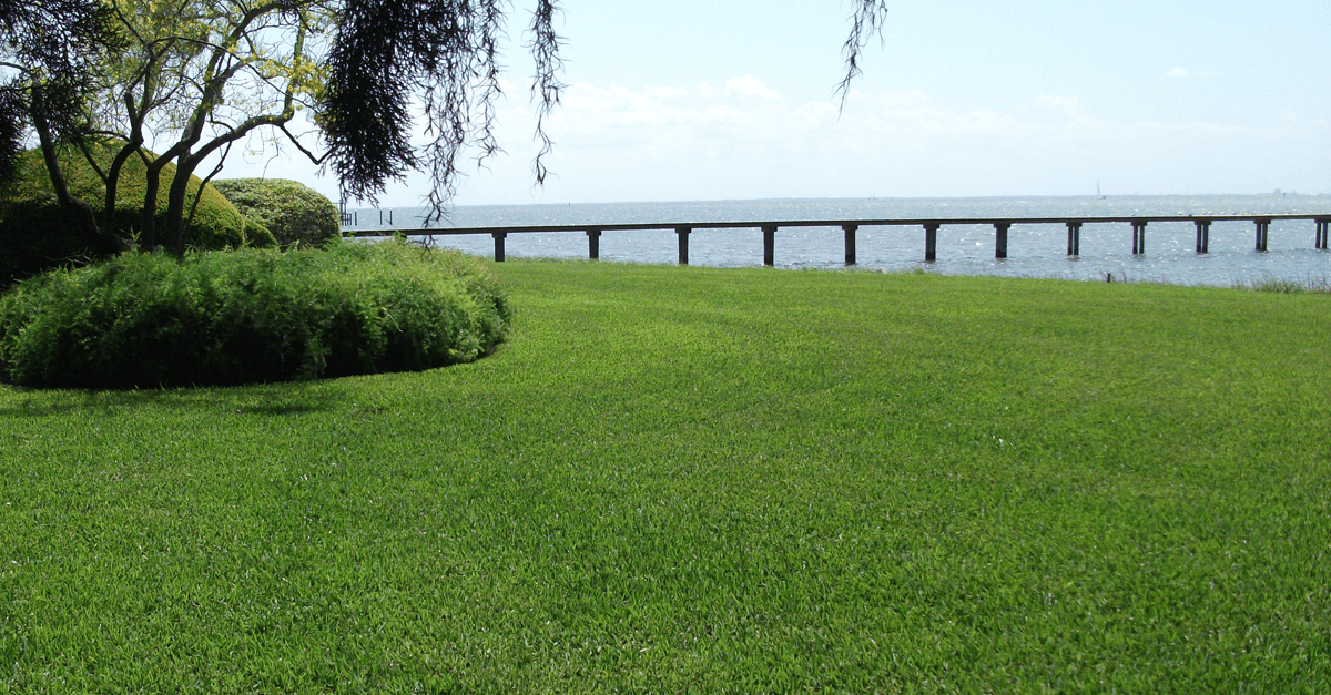 Lawns Protect Florida Waterways