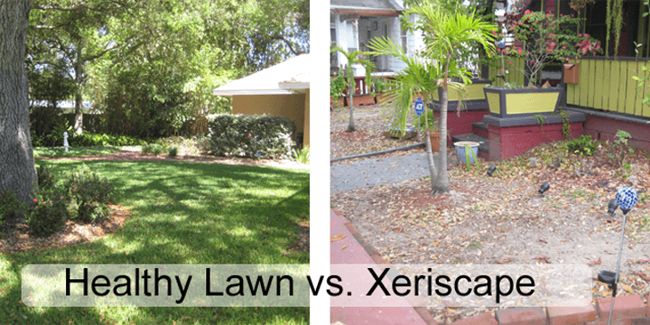 Healthy Lawn vs. Xeriscape
