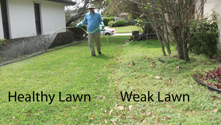how to clean your lawn from weeds