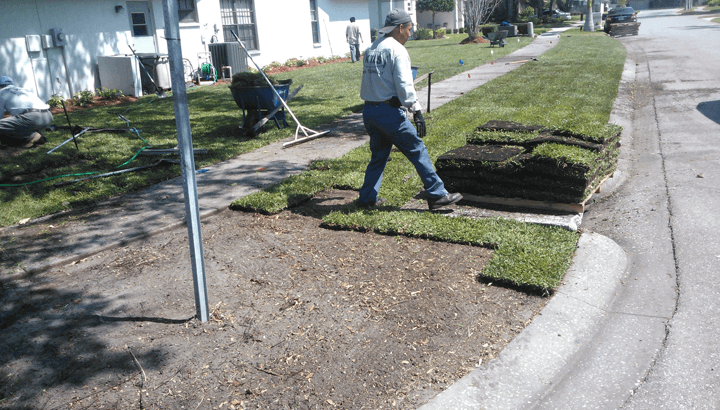 Planting A Lawn With St Augustine Sod I Love Turf