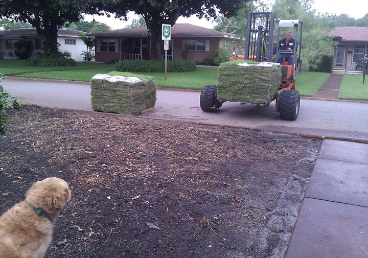 preparing yard for sod Part - 15:  preparing yard for sod pictures