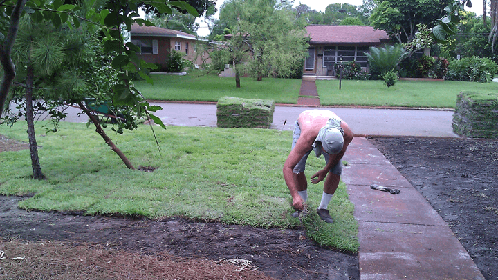 Lay Fresh Sod With Edges Touching
