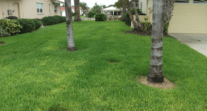Iron Chlorisis In St Augustine Lawn