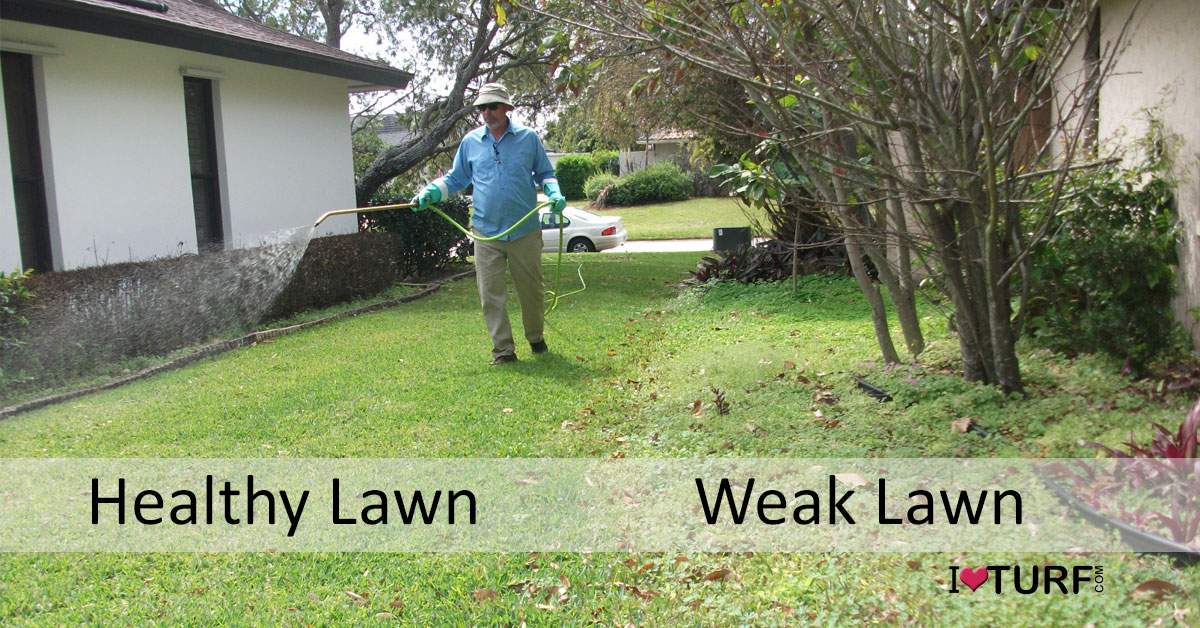 APL Pest Control Tech Spraying Healthy Lawn next to weak weedy lawn