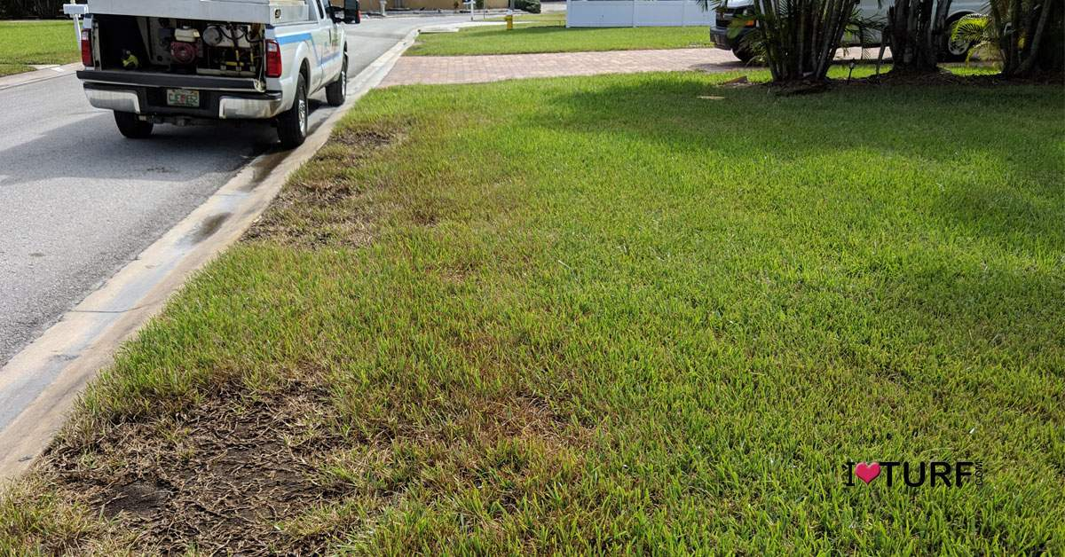 Chinch bug damage on St Augustine lawn  along the curb line of a road