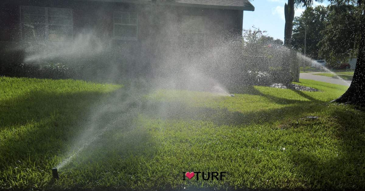 Irrigation running on a St Augustine lawn