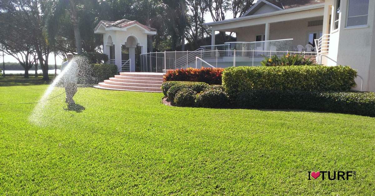 Lawn tech spraying a St Augustine lawn