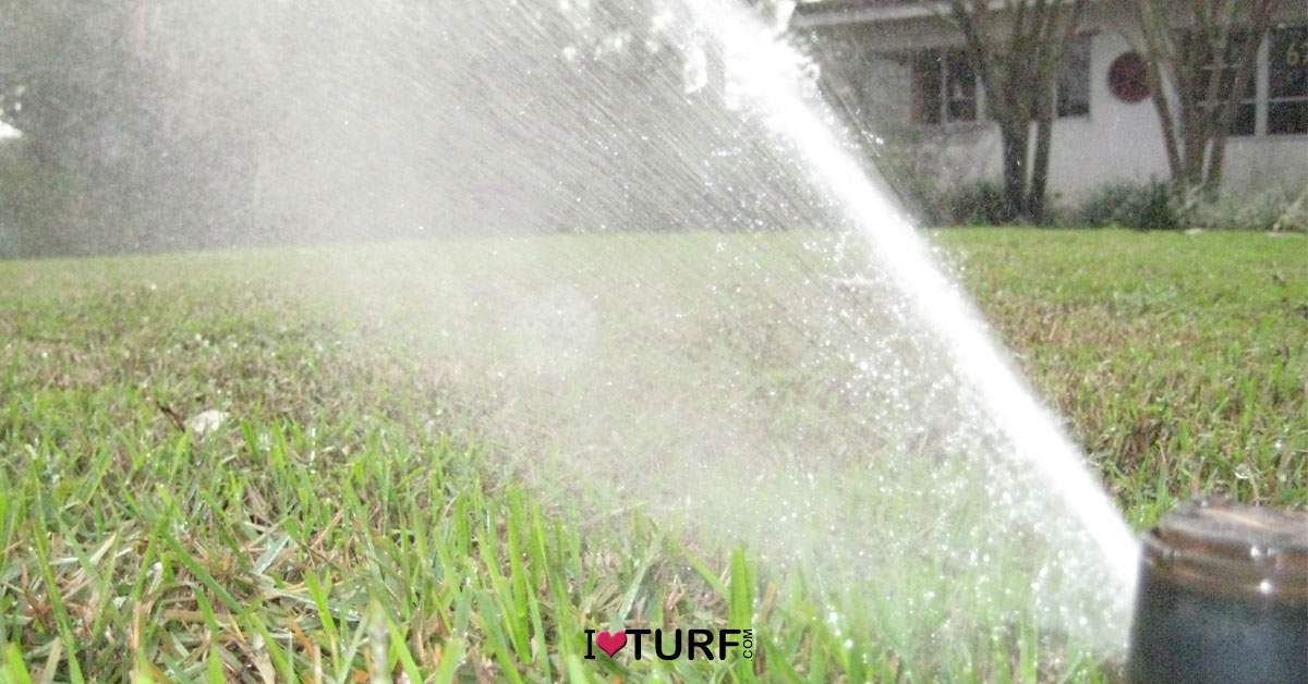 Sprinkler head irrigating a lawn