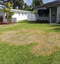 Brown Patch in St Augustine Lawn