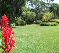 Homeowners Guide to Properly Caring for a St Augustine Lawn