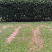 Blazing Hot Florida Sun can Scald the Turf leaving Brown Streaks in the Lawn