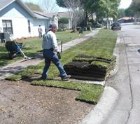 Alternative to Sodding a Lawn: Renovation